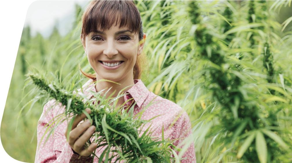 Woman looking well in the hemp fields
